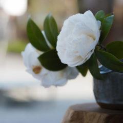 境内に飾られたお花
