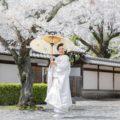 「桜満開の中で和装結婚写真」他|2019年4月 撮影実績・お客様の声