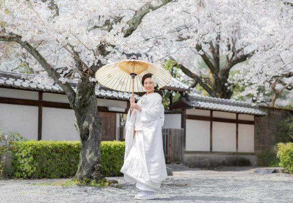 桜満開の中での白無垢のお写真
