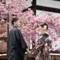 「桜満開の中で和装結婚写真」他|2019年4月(2)撮影実績・お客様の声