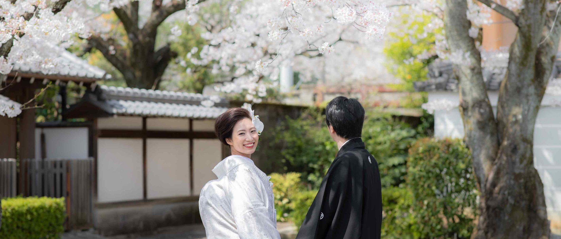 京都の満開の桜と白無垢姿の花嫁様