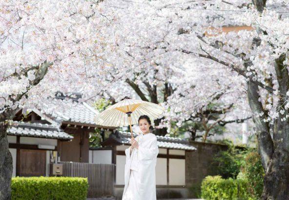 桜満開の京都の前撮りお写真