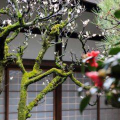 冬の京都のお庭