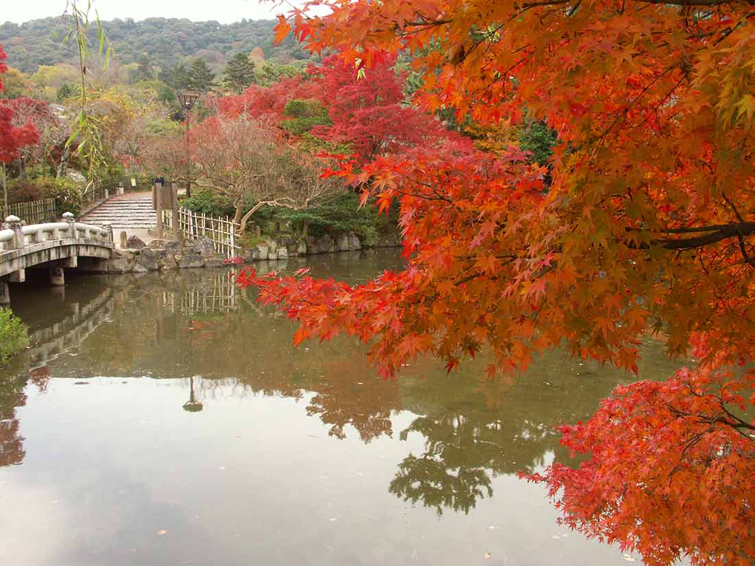円山公園の早朝