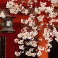 京都の人気観光地で前撮り・ロケーション撮影の注意点