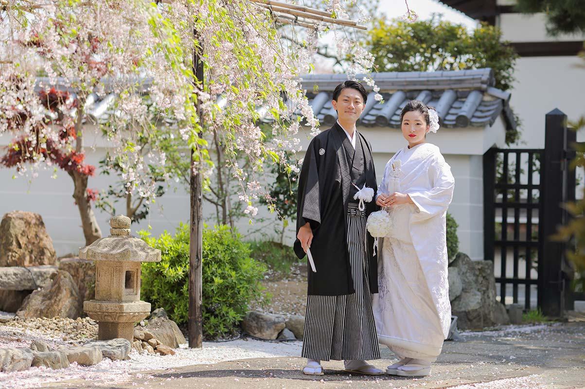 妙蓮寺枝垂れ桜での白無垢羽織袴姿の新郎新婦様