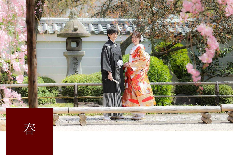 京都で前撮り「春」と桜の時期について解説