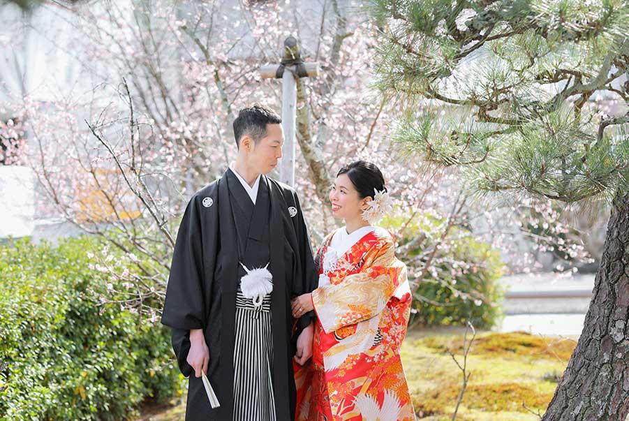 御会式桜で冬でも桜と前撮り