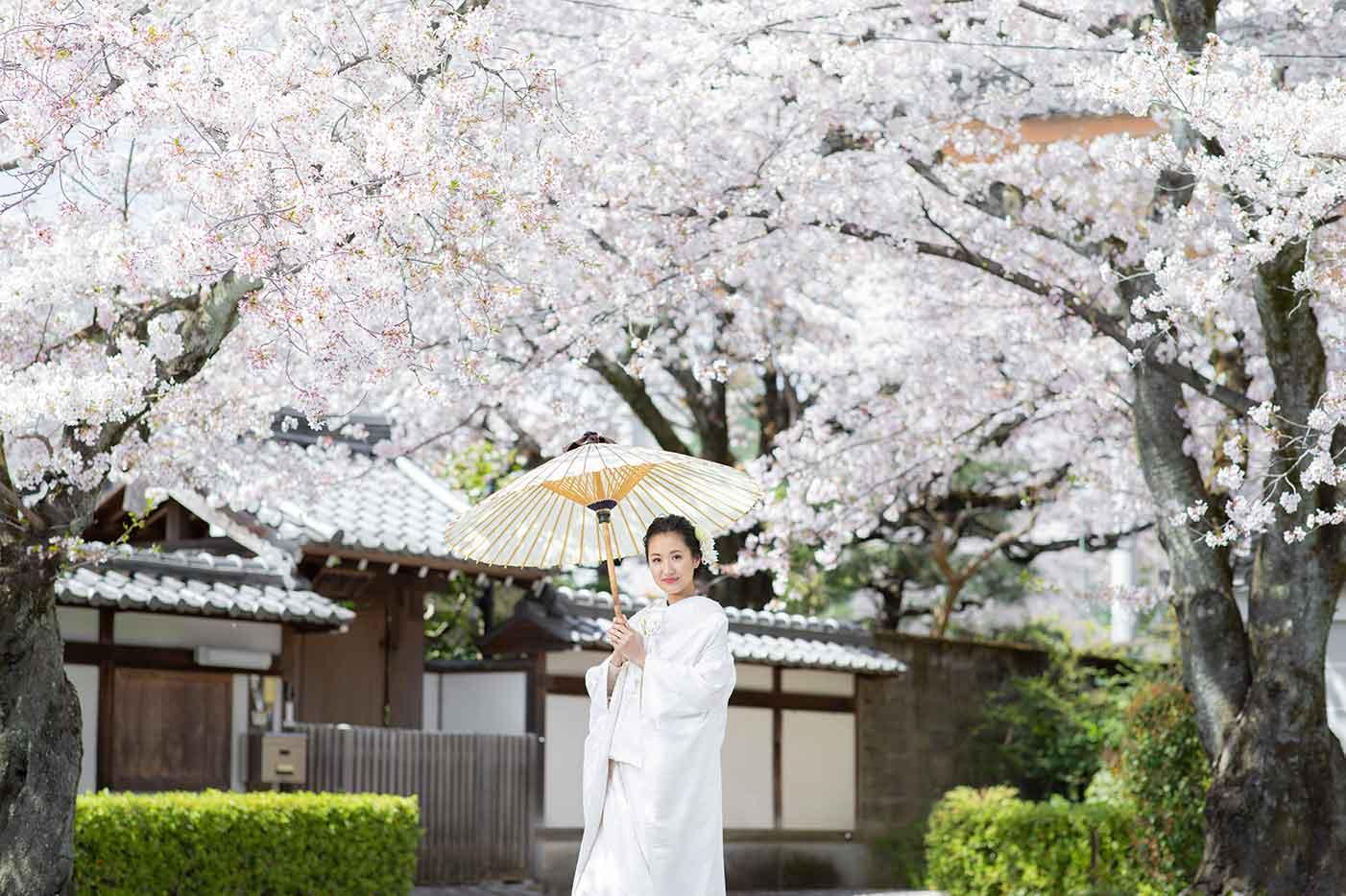 桜と白無垢姿の花嫁様