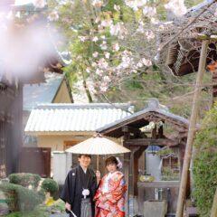 京都戒光寺の桜と和装前撮り