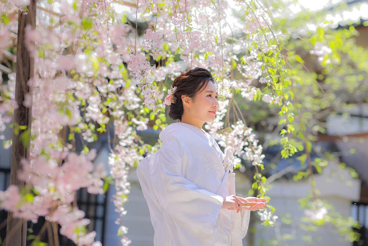 枝垂れ桜の下の白無垢姿の花嫁様