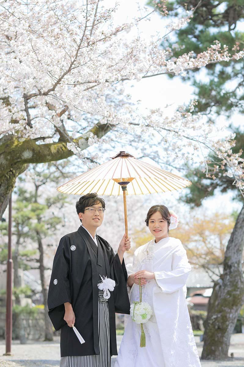 京都の桜を背景に番傘とのお写真