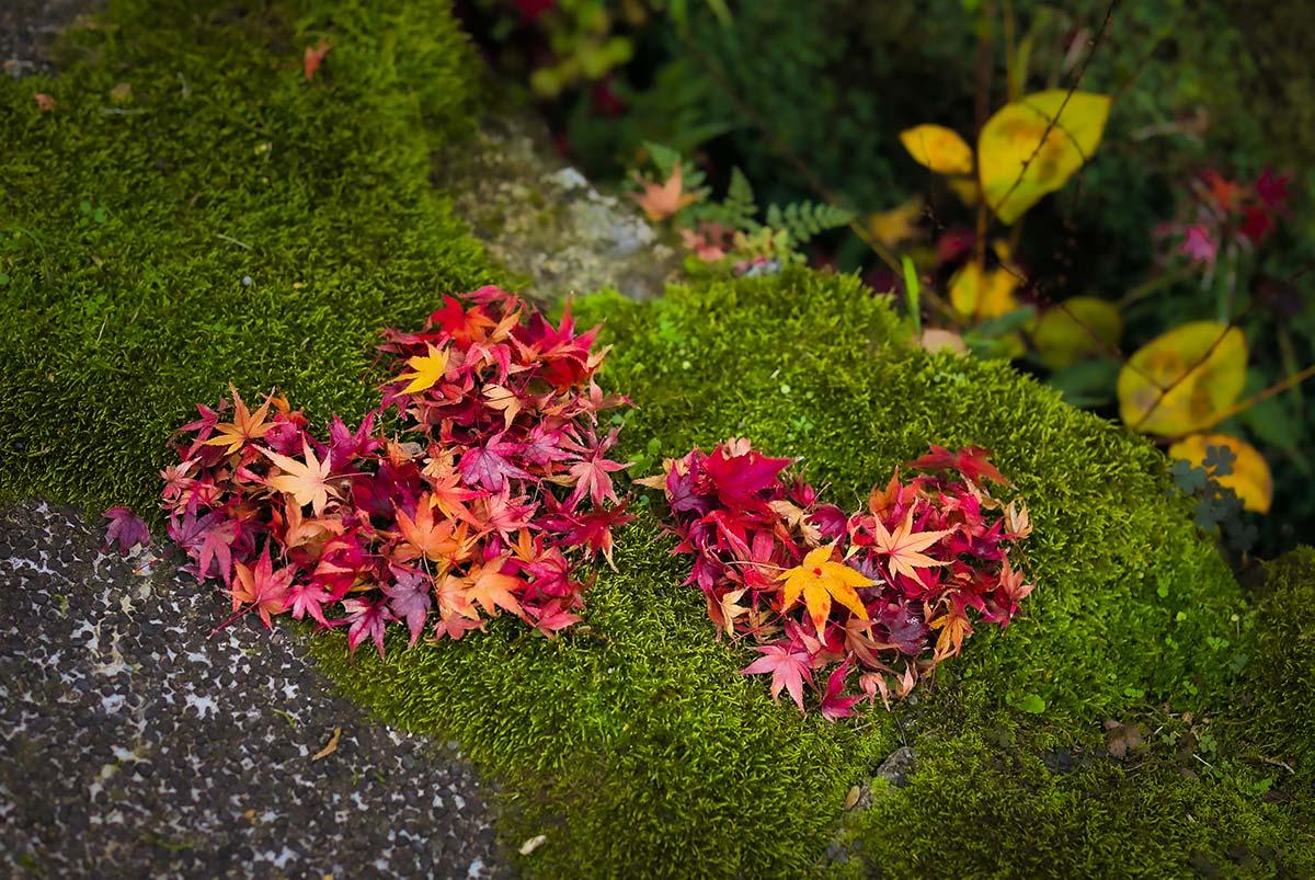 京都の紅葉の時期はいつ?画像